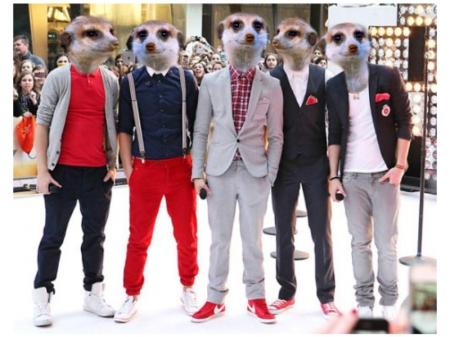 Master meerkats