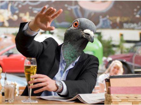 master pigeon man