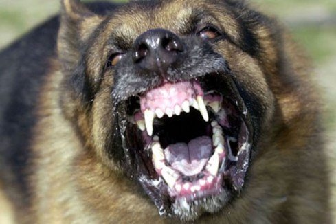 Image result for angry dog