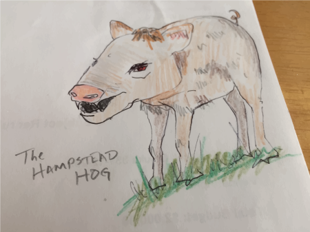 hampstead hog
